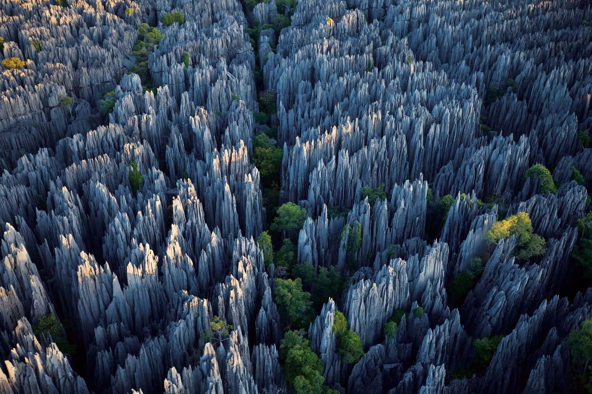 Каменный лес Мадагаскара
