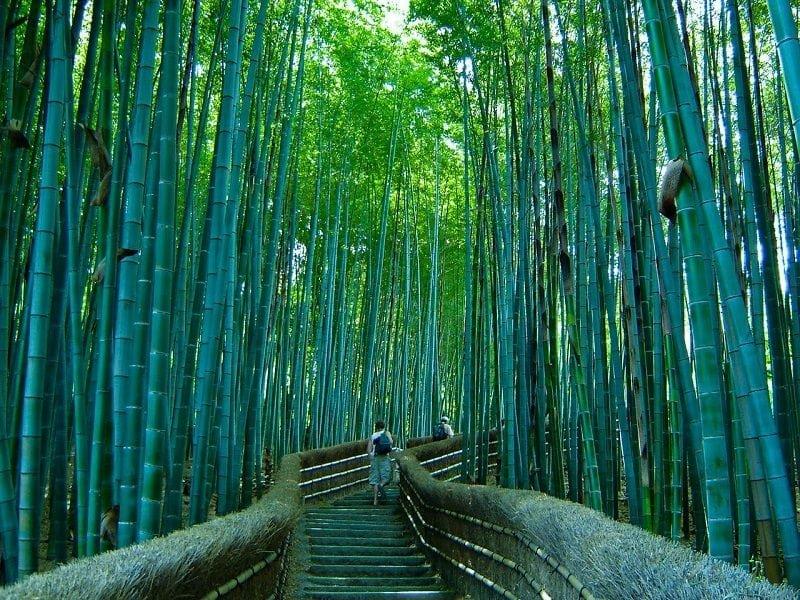 Бамбуковая роща в Киото, Япония