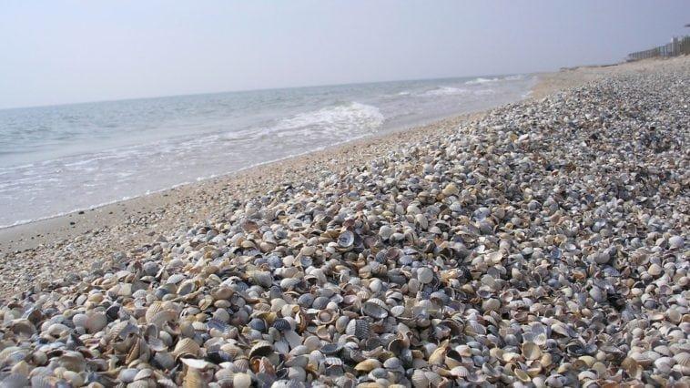 Азовское море 2018: Санатории, отдых, отзывы