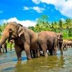 Шри-Ланка. Жемчужина Индийского океана