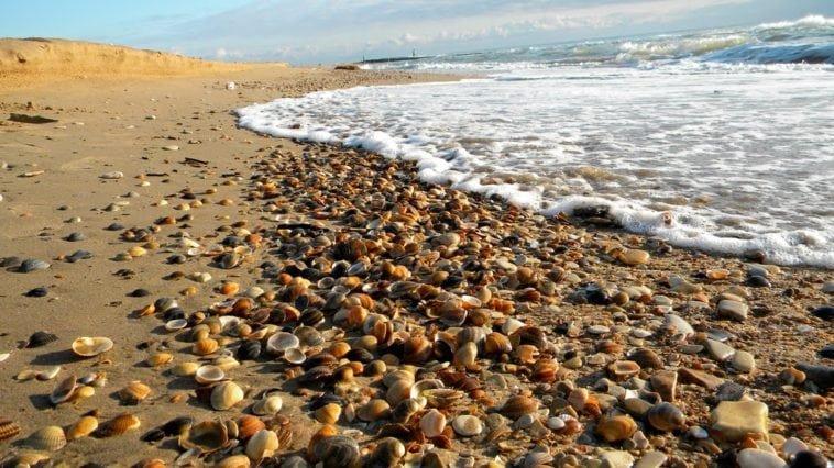 Пляжи Каспия