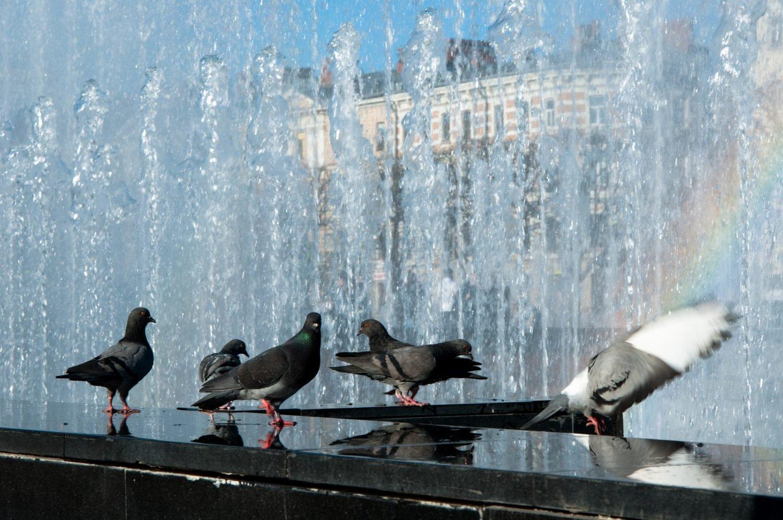 Куда сходить в Санкт-Петербурге, советы туристов