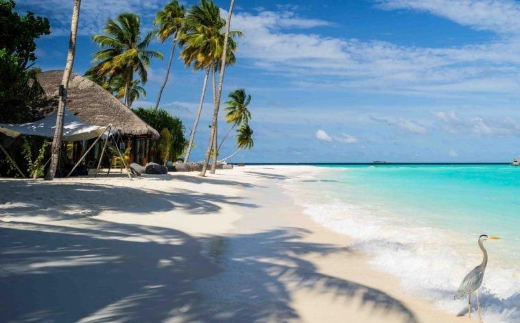 Роскошная неделя на Мальдивах. Тур на двоих на Северный Ари Атолл (Мальдивы) на 7 ночей за 146 616 р., вылет 17 июня.