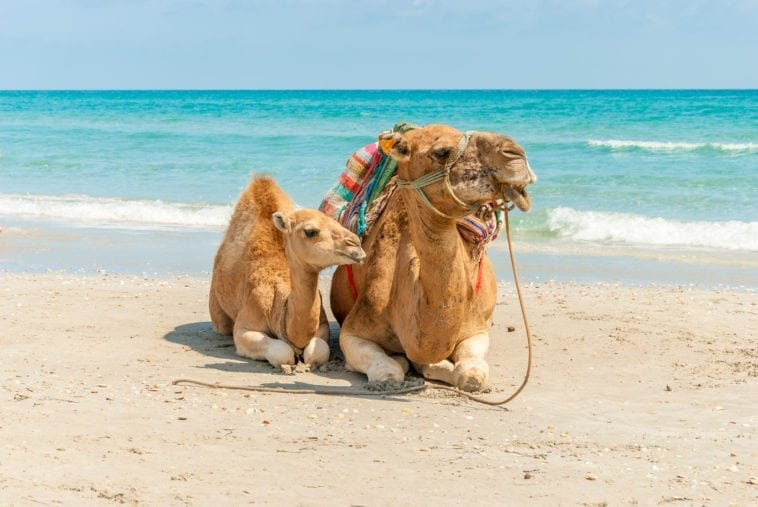 Отзывы туристов о Тунисе, стоит ли ехать?