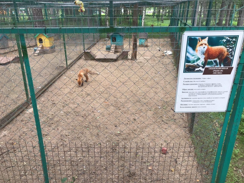 Костромской зоопарк: адрес, отзывы, как добраться?